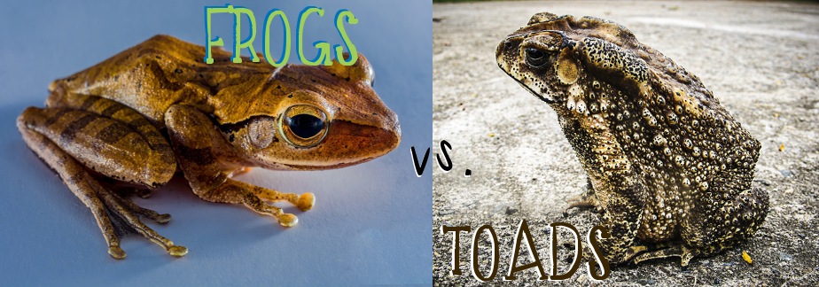 toads and toads revisited comparison philip Toads, by philip larkin in march 1954, when he wrote toads, philip larkin was working as a sub-librarian at queen's university, belfast, having held the post for nearly four years his initial enthusiasm for the job had worn off and he was ready for a change.